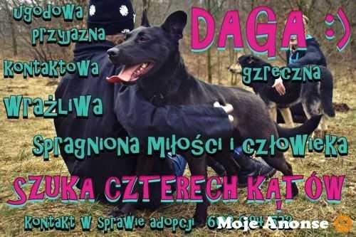 Daga - ile jeszcze dni, nim jej nadzieja pryśnie