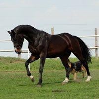 Ukraina.Pasieka,stadnina koni,targ,domy drewniane na 10 ha.Cena 1