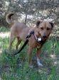 Moris, wyjątkowy pies dla wyjątkowego człowieka