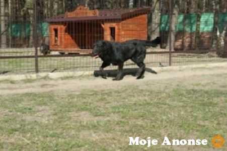 Grzeczny, uroczy psiak szuka domu