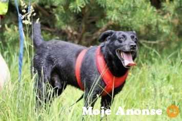 Szymon - inteligentny, aktywny piesek szuka domu