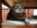 Kotka Zuzanna szuka kochającego domu