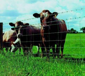 Ukraina. Byczki, jalowki 4 zl/kg. Siano,sloma do darmowego zbioru