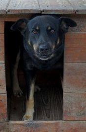 SPRYCIARZ - aktywny, śliczny pies szuka domu