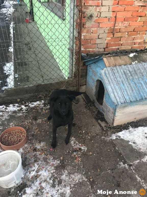 Amber - mix labradora od dwóch lat w punkcie przetrzymań - adopcj
