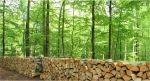 Ukraina.Wszystko z branzy drzewnej. Tanio Drewno opalowe 15 zl/m3