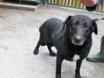 Arni - śliczny psiak od 5 lat czeka na dom