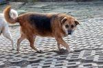 Wiki vel Ciocia - ponad 11 lat w schronisku...
