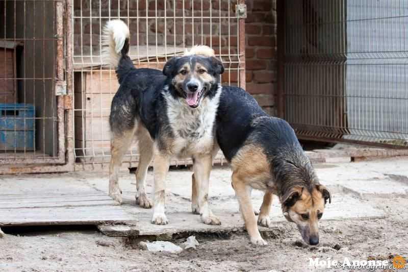 TUREK - schronisko jest jego jedynym domem - adopcja