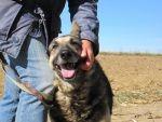Misiek - kolejna smutna, psia opowieść - adopcja