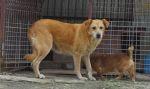 Cerowana II - od szczeniaka w schronisku - czeka na dom