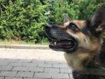 Strach ma wielkie oczy, psie oczy - adopcja Molli